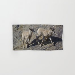 Big horn sheep young in Jasper National Park Hand & Bath Towel