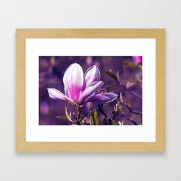 Ultra Violet Magnolia Framed Art Print