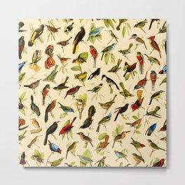 Vintage Birds of Brazil Designs Collection Metal Print