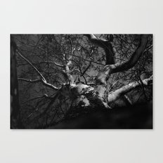 Tree B&W Canvas Print