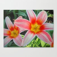 tulips Canvas Prints featuring Tulips by Vitta