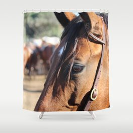 Horse-1 Shower Curtain