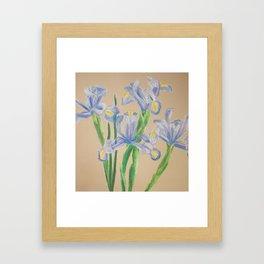Sunday Morning Iris Framed Art Print