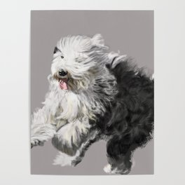 Old English Sheepdog On the Move Poster
