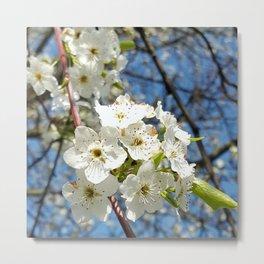 Cherry Tree Blossom Over Spring Blue Sky Metal Print