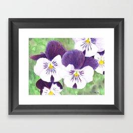 Pansies flowers Framed Art Print
