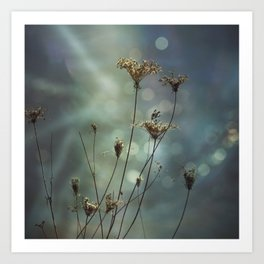 Queen Anne's Lace on Bokeh Background Art Print