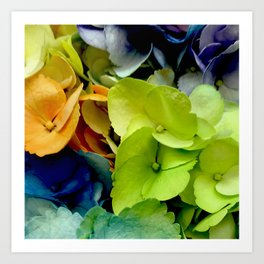 Rainbow-Colored Flowers: ALL Colors are Loved Art Print