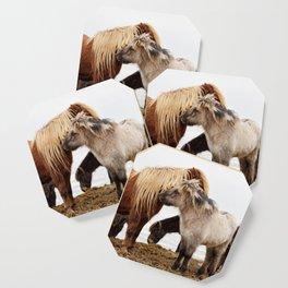 Iceland horses Coaster