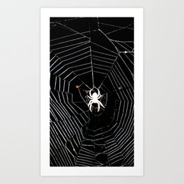 spider blow out Art Print