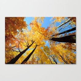 Fall Forest Sky Canvas Print