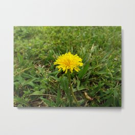 Dandelion Perfection Metal Print