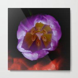 Light Painting Purple Tulip Metal Print
