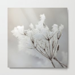Winter macro Metal Print