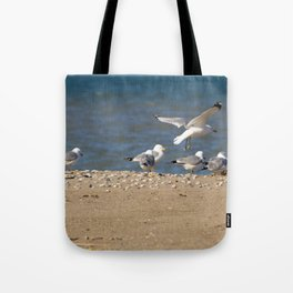 Landing | Seagull Photography Tote Bag