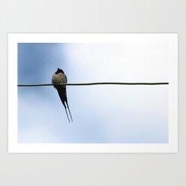 The noble barn swallow Art Print