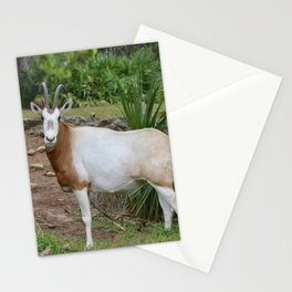 Scimitar Horned Oryx Stationery Cards