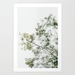 Overhead Canopy - Abstract Tree Photo Art Print