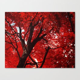 Red Canopy Canvas Print