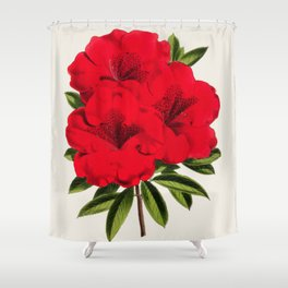 Vintage Botanical Illustration Beautiful Red Azalea Flower Floral Drawing Shower Curtain