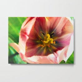 Pink Tulip #2 Metal Print