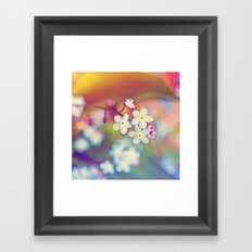 Rainbow Flowers Nature Photography Framed Art Print