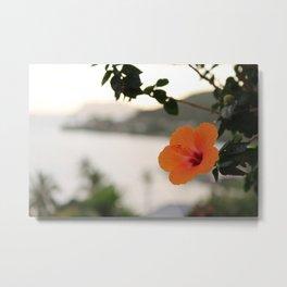 Hibiscus, Kahaluu Metal Print