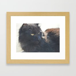 Cat in the Sun Framed Art Print