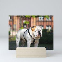 No Entry - Bulldog #decor #homedecor Mini Art Print