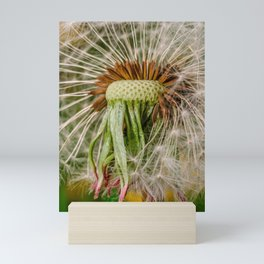 Fluffy Dandelion Disperse Photograph Mini Art Print