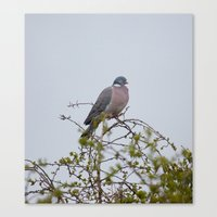 pigeon Canvas Prints featuring Pigeon by Imager