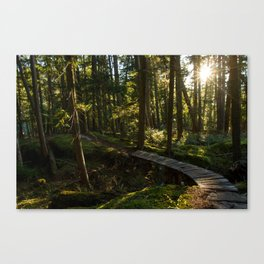 North Shore Trails in the Woods Canvas Print