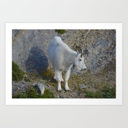 Mountain goat in the Canadian Rocky Mountains Art Print