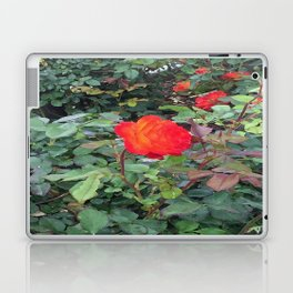 Sunset Rose #1 Laptop & iPad Skin