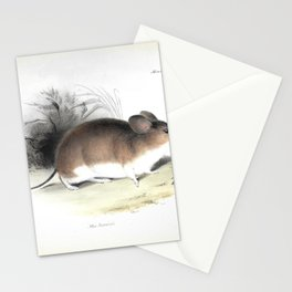 The Zoology of the Voyage of HMS Beagle 1840 - Mammals 23: Mus darwinii / Darwin's Mouse Stationery Cards