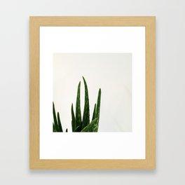 Aloe vera Framed Art Print