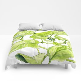 Devils Ivy Illustration Comforters