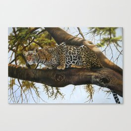A Leopard ready to Pounce Canvas Print