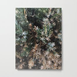 Browning Bush Metal Print