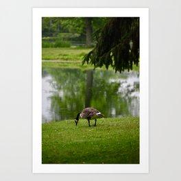 Goose by a pond Art Print