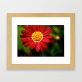 Red Delicious Framed Art Print