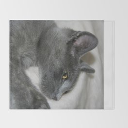 Close Up Portrait Of A Relaxed Grey Cat  Throw Blanket