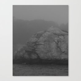 Sea Gull Canvas Print