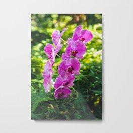 Pink Moth Orchids Metal Print