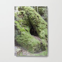 Moss Forest Metal Print