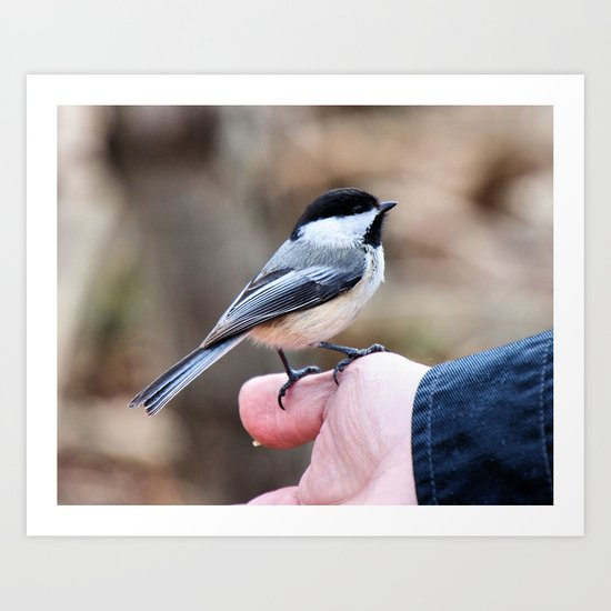 lets feed the birds Art Print