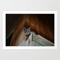 Barn Cat Art Print