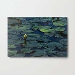 Lilly Pads  Metal Print
