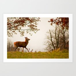 The Post Rut Strut Art Print