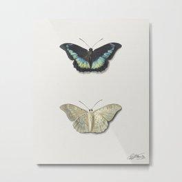 Boven- en onderaanzicht van een vlinder by Georgius Jacobus Johannes van Os Metal Print